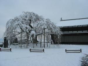 舞台桜と麻績学校校舎
