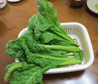 カツオナ収穫物