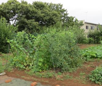 夏の菜園2