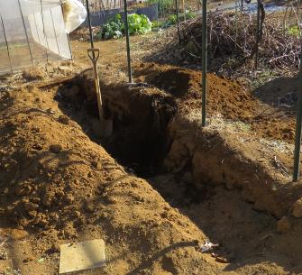 ヤマイモ収穫穴掘り