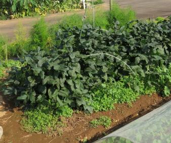 小粒黒豆菜園10月
