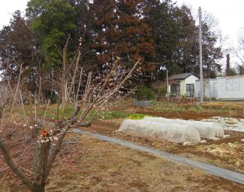 2月の菜園1
