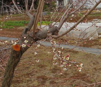 2月の菜園2