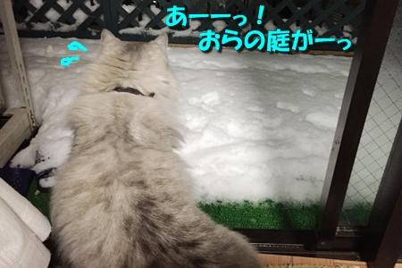 おらのベランダが雪景色5