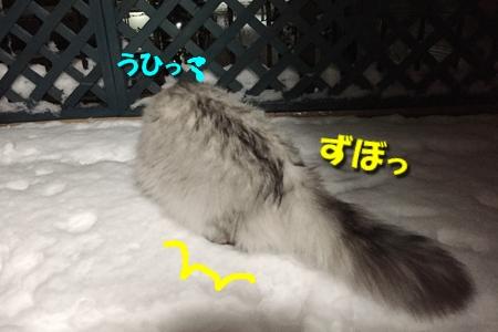 おらのベランダが雪景色8