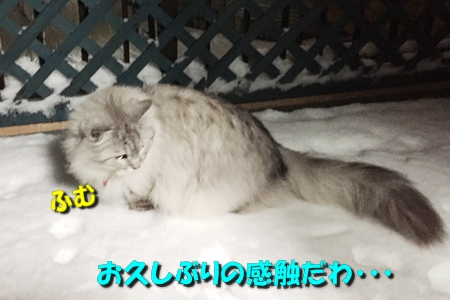おらのベランダが雪景色9