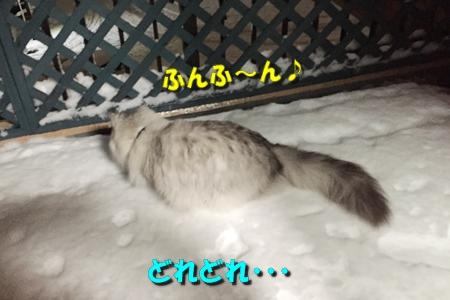 おらのベランダが雪景色10
