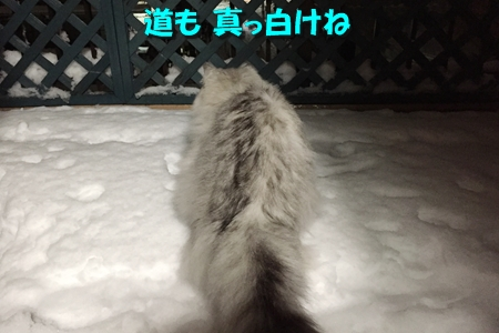 おらのベランダが雪景色11