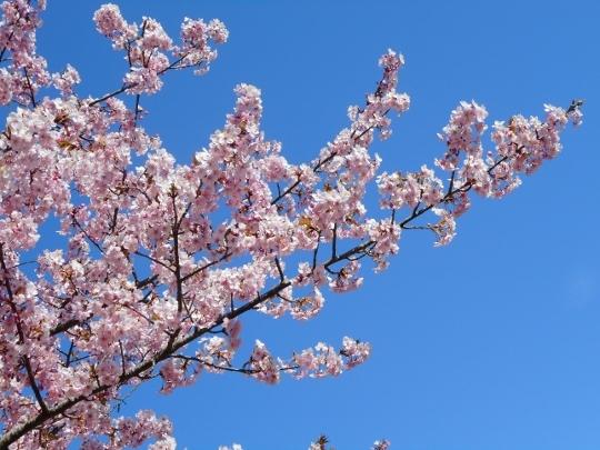 18_02_18-09kotsubo.jpg