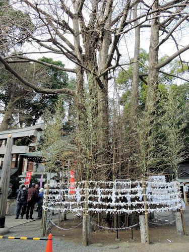 180114kichijou12.jpg