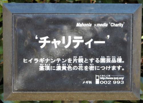 180130chikou04.jpg