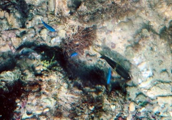 ⑤熱帯魚 (550x382)