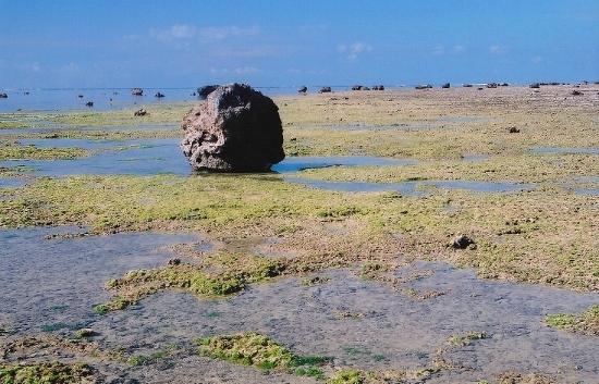 ⑧白保海岸 (550x353)