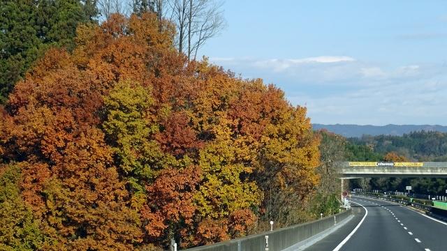 3沿道の紅葉と遠方の山並み