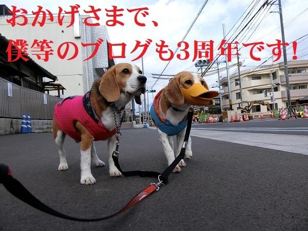 【 ブログ記念日 】TARO&JIROブログも3周年です!