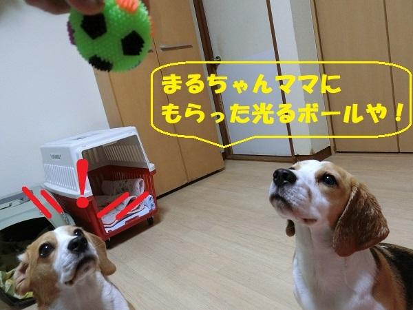 TARO&JIROはボール遊びも大好き!