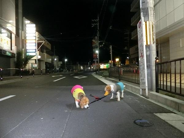 TARO&JIROのなかよし散歩!