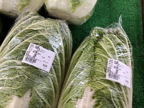180128_06白菜