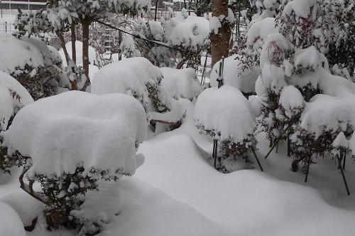 午前8時ごろの庭