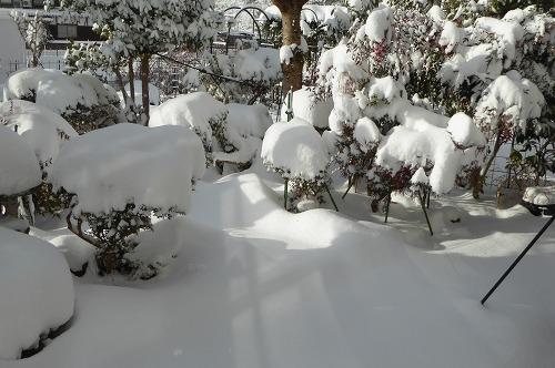 12時頃の庭