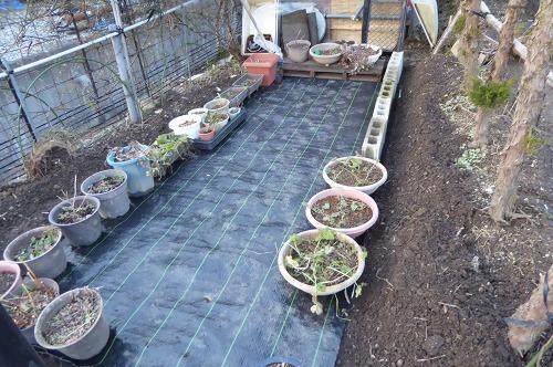 庭の改造後
