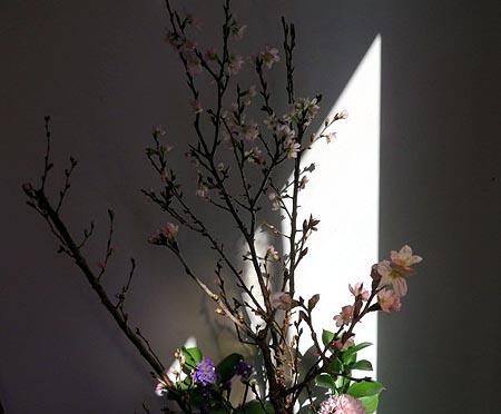29入口彼岸桜