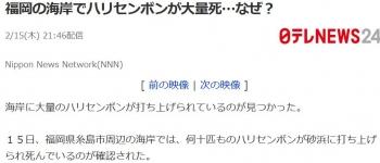 news福岡の海岸でハリセンボンが大量死…なぜ?