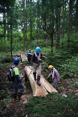 s-天然スギ巨木の森①