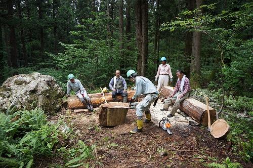 s-天然スギ巨木の森②