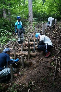 s-天然スギ巨木の森④