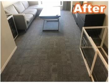 Carpet (6)