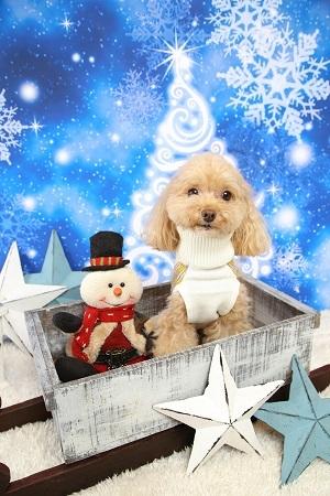 Christmas 2017-12 (2)