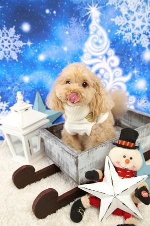 Christmas 2017-12 (3)