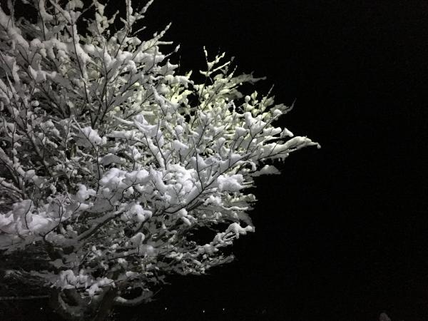180123-雪の華