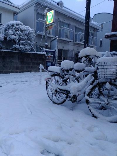 snow1700.jpg
