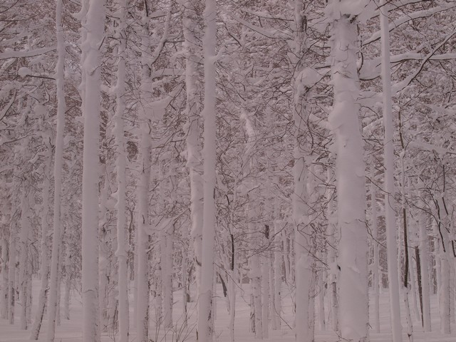 s3雪の森4