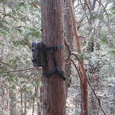 樹上のカメラトラップ