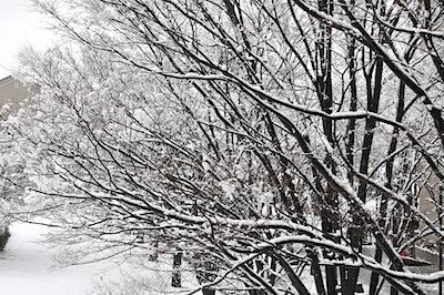 雪景色2月2日