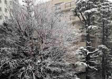 多摩川 雪