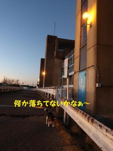 IMG_a1301-2.jpg