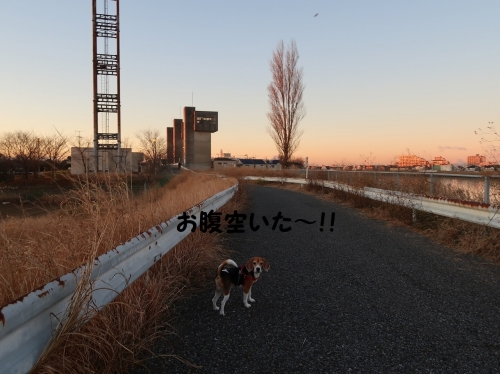 IMG_a1324-2.jpg