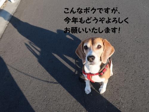 IMG_a1532-2.jpg