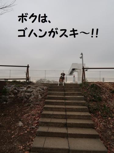 IMG_a2722.jpg