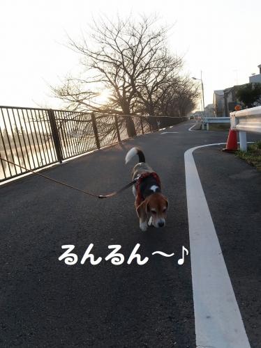 IMG_a2735-2.jpg
