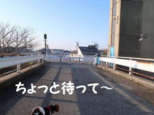 IMG_a2806-2.jpg
