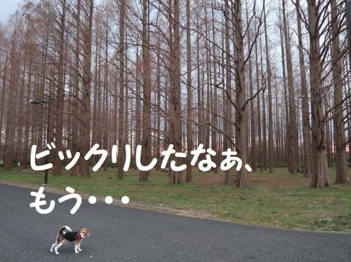 IMG_a4645-2.jpg