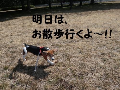 IMG_a4740-2.jpg