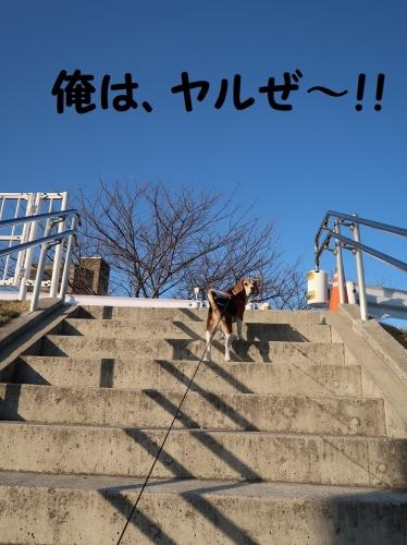 IMG_a5010-3.jpg