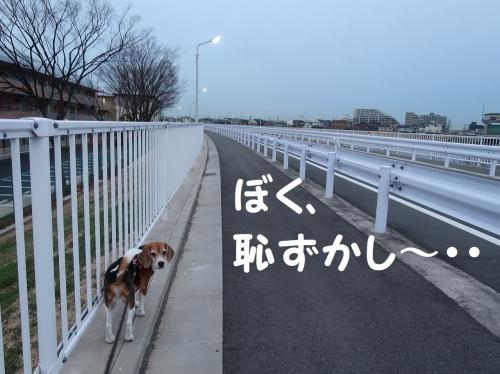 IMG_a5157-2.jpg