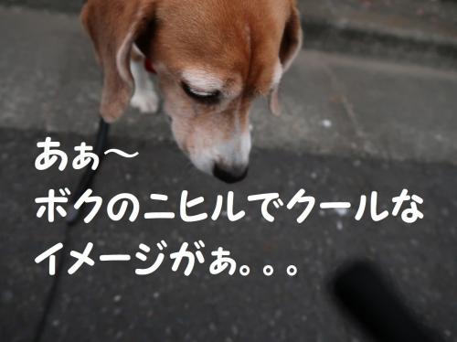 IMG_a5178-2.jpg